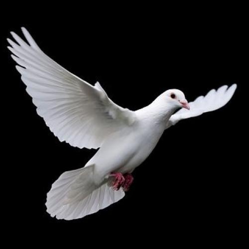 Lélekszerviz, a szellemiség vándorútja a teljesség felé.